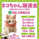 ネコちゃん譲渡会