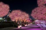 櫻色に染まる奥浅草・江戸回廊<中止となりました。>