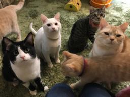 年間100匹の猫を救う!千葉に保護猫を里親へと繋ぐシェルターを