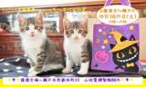 猫の譲渡会 IN 瀬戸 ~ ちーむにゃいんず 2020年10月17日開催