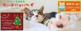 猫の譲渡会 IN 瀬戸 ~ ちーむにゃいんず 2020年12月5日&19日開催
