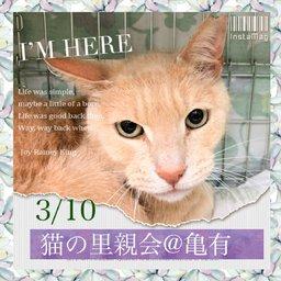 猫の里親会@亀有