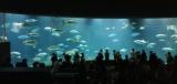葛西臨海水族館出会い散策