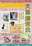 保護犬・保護猫 譲渡会&譲渡セミナー 「譲渡会★オレシンジチャンス2019」