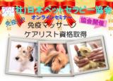 ペットの免疫マッサージ   日本ペットセラピー協会