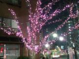 冬の一葉桜まつり イルミネーション