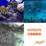 40代50代 葛西臨海水族館出会い巡り散策