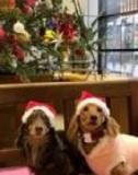 tomoniチャリティーイベント「わんちゃんと一緒にクリスマス」