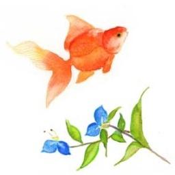 特別講座 水彩と色鉛筆で描く金魚のイラスト付き暑中見舞い 全1回 東京都世田谷区のイベント ことさが Smart